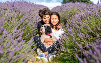 Mayfield Lavender Family Session